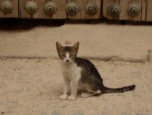 Wilde Katze an der Mezquita