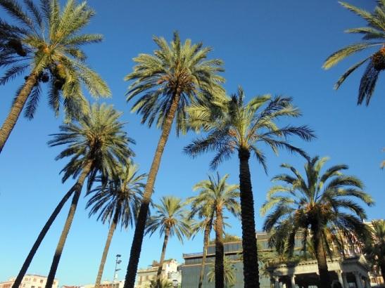 01 Palmen auf der Piazza Castelnuovo
